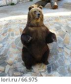 Купить «Медведь стоит на задних лапах», фото № 66975, снято 23 июня 2007 г. (c) Катя Белякова / Фотобанк Лори