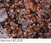 Купить «Разноцветные лишайники на теплом камне у берега моря», фото № 67219, снято 30 июля 2004 г. (c) Harry / Фотобанк Лори