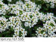 Купить «Цветы», фото № 67595, снято 10 июля 2007 г. (c) Лифанцева Елена / Фотобанк Лори