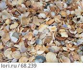 Купить «Ракушки на берегу», фото № 68239, снято 24 марта 2005 г. (c) Павел Филатов / Фотобанк Лори