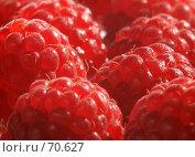 Купить «Ягода-малина», фото № 70627, снято 12 августа 2007 г. (c) Владимир Мельников / Фотобанк Лори