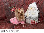 Купить «Йоркширский терьер  и снеговик», фото № 70739, снято 24 октября 2006 г. (c) Ирина Мойсеева / Фотобанк Лори