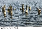 Купить «Старые деревянные сваи в воде», эксклюзивное фото № 71263, снято 5 ноября 2006 г. (c) Михаил Карташов / Фотобанк Лори