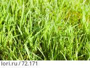 Купить «Зелёная трава с каплями росы», фото № 72171, снято 27 июля 2007 г. (c) Александр Чермянин / Фотобанк Лори