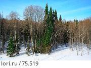Зимний лес. Стоковое фото, фотограф Александр Вальваков / Фотобанк Лори