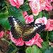 Из серии : живые цветы..., фото № 75631, снято 15 июля 2007 г. (c) Алексей Ладыгин / Фотобанк Лори