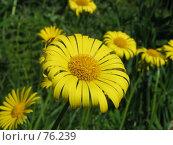 Желтый цветок. Стоковое фото, фотограф Игорь Олюнин / Фотобанк Лори