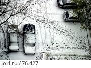 Купить «Первый снег», фото № 76427, снято 26 октября 2005 г. (c) Морозова Татьяна / Фотобанк Лори