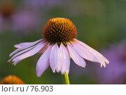 Купить «Цветок», фото № 76903, снято 22 мая 2018 г. (c) Игорь Соколов / Фотобанк Лори