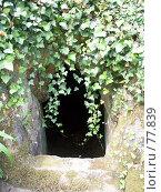 Купить «Вход в пещеру», эксклюзивное фото № 77839, снято 29 июля 2007 г. (c) Михаил Карташов / Фотобанк Лори