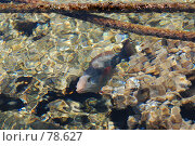 Купить «Рыбы Красного моря», фото № 78627, снято 22 августа 2007 г. (c) Лифанцева Елена / Фотобанк Лори