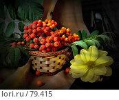 Купить «Рябиновая гроздь», фото № 79415, снято 2 сентября 2007 г. (c) Таня Нотта / Фотобанк Лори