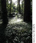 Купить «Лес», эксклюзивное фото № 81875, снято 29 июля 2007 г. (c) Михаил Карташов / Фотобанк Лори
