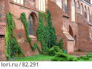 Купить «Стена с диким виноградом около входа в музей», фото № 82291, снято 3 сентября 2007 г. (c) Parmenov Pavel / Фотобанк Лори