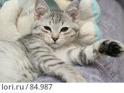 Купить «Взгляд маленького серого котенка», фото № 84987, снято 5 сентября 2007 г. (c) Останина Екатерина / Фотобанк Лори