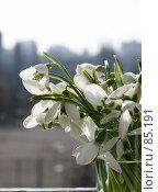 Купить «8 марта», фото № 85191, снято 15 февраля 2007 г. (c) Alla Andersen / Фотобанк Лори