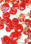 Красная смородина, фото № 85479, снято 2 июля 2007 г. (c) Андрей Армягов / Фотобанк Лори