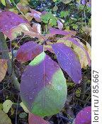 Купить «Ветка осени», фото № 85667, снято 2 января 2005 г. (c) Alla Andersen / Фотобанк Лори