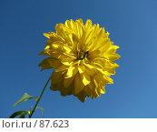 Золотой шар. Стоковое фото, фотограф Юрий Драгунов / Фотобанк Лори