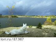 Купить «Осенний пейзаж с радугой над озером и собакой на переднем плане», фото № 87987, снято 19 февраля 2019 г. (c) Игорь Соколов / Фотобанк Лори