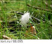 Перышко на траве. Стоковое фото, фотограф Огульчанский Александер / Фотобанк Лори