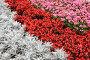 Цветы, фото № 89247, снято 26 августа 2007 г. (c) А.Федяшов / Фотобанк Лори