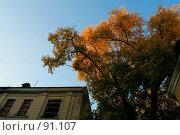 Купить «Дерево», фото № 91107, снято 30 сентября 2007 г. (c) Антон Белицкий / Фотобанк Лори