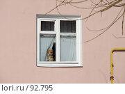Купить «Долгое ожидание. Собачка смотрящая в окно в ожидании своего хозяина.», фото № 92795, снято 20 апреля 2018 г. (c) Александр Тараканов / Фотобанк Лори