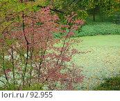 Осень в Ясной поляне. Стоковое фото, фотограф Надежда Климовских / Фотобанк Лори