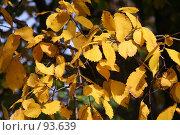 Купить «Золотая ветка вяза», фото № 93639, снято 23 сентября 2007 г. (c) Елена Мельникова / Фотобанк Лори