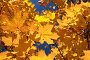 Желтые кленовые листья на фоне синего неба, фото № 94295, снято 3 октября 2007 г. (c) Алексей Баринов / Фотобанк Лори