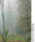 Купить «Туманное утро в садоводстве под Санкт-Петербургом», фото № 94635, снято 30 сентября 2007 г. (c) Анастасия Некрасова / Фотобанк Лори