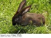 Кролик в траве. Стоковое фото, фотограф Герман Молодцов / Фотобанк Лори