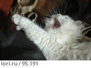Купить «Кот зевает», фото № 95191, снято 9 августа 2006 г. (c) Юлия Яковлева / Фотобанк Лори