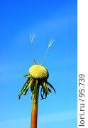 Купить «Последние семена. (Last seeds. )», фото № 95739, снято 23 сентября 2007 г. (c) Анатолий Теребенин / Фотобанк Лори