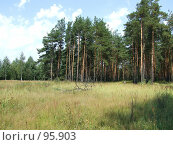 Купить «Вид на сосновый бор и поле с травой в летний полдень», фото № 95903, снято 24 января 2020 г. (c) Parmenov Pavel / Фотобанк Лори