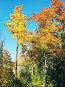 Пора золотой осени, фото № 98535, снято 30 марта 2017 г. (c) Людмила Жмурина / Фотобанк Лори