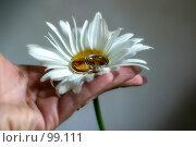 Купить «Свадебные кольца на цветке», фото № 99111, снято 29 июля 2006 г. (c) Морозова Татьяна / Фотобанк Лори