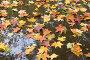 Осенние листья в дождевой луже, фото № 99607, снято 8 октября 2006 г. (c) Солодовникова Елена / Фотобанк Лори