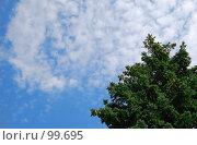 Небо над елью. Стоковое фото, фотограф Арестов Андрей Павлович / Фотобанк Лори