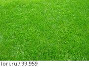 Купить «Зеленый газон», фото № 99959, снято 23 сентября 2007 г. (c) Елена Руденко / Фотобанк Лори