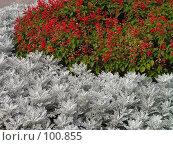 Купить «Цветочный прибой», фото № 100855, снято 4 сентября 2005 г. (c) Калёнов Павел / Фотобанк Лори