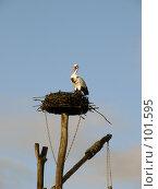 Купить «Гнездо», фото № 101595, снято 11 октября 2007 г. (c) Derinat / Фотобанк Лори
