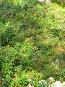 Северный виноград(брусника), фото № 102351, снято 23 октября 2016 г. (c) Осиев Антон / Фотобанк Лори