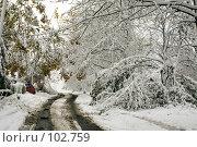 Купить «Неожиданное начало зимы во Владивостоке», фото № 102759, снято 14 августа 2018 г. (c) TigerFox / Фотобанк Лори