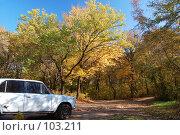 Автомобиль в лесу. Стоковое фото, фотограф Арестов Андрей Павлович / Фотобанк Лори
