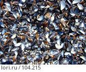 Купить «Ракушки на пляже у Черного моря», фото № 104215, снято 11 декабря 2018 г. (c) Сергей Сухоруков / Фотобанк Лори