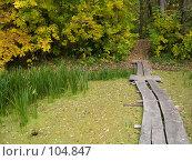 Купить «Берег лесного озера осенью», фото № 104847, снято 15 декабря 2017 г. (c) Борис Панасюк / Фотобанк Лори