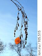Купить «Одинокий берёзовый лист на фоне облетевших осенних деревьев», фото № 105515, снято 28 октября 2007 г. (c) Круглов Олег / Фотобанк Лори
