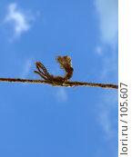 Купить «Крепкий узел на фоне голубого неба», фото № 105607, снято 8 июля 2007 г. (c) Сергей Сухоруков / Фотобанк Лори